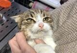 Koty Macieja - Bruno