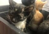 Koty Macieja - maluchy